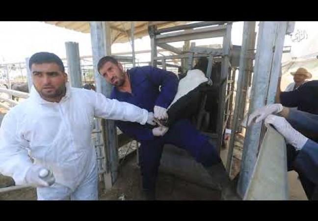 وزارة الزراعة تنظم جولة للصحفيين للاطلاع على مزارع المواشى والأبقار مع قرب موسم الأضاحي