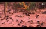عالم النمل كد وعمل وإصرار حياة