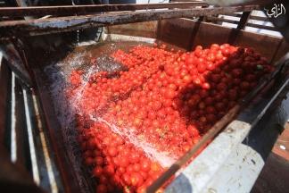 جولة في مصانع انتاج عصير البندورة بغزة – تصوير/ رشاد الترك
